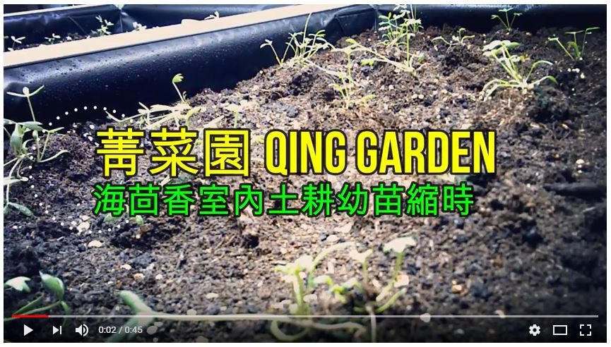 qing garden sea fennel
